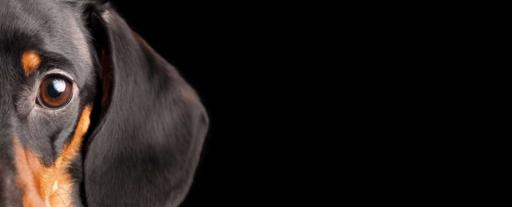 nombre-para-perros-salchichas-img