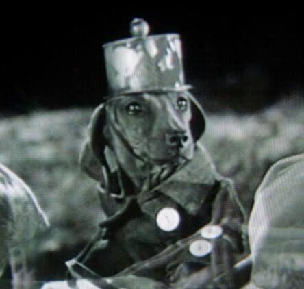 dachshund in the war