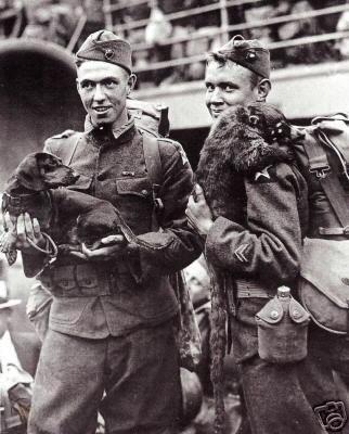soldados con teckel