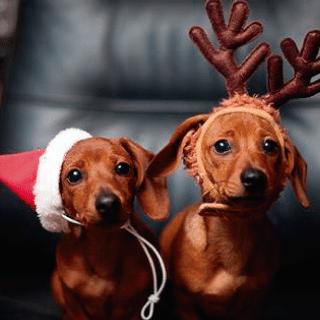 dachshund navidad renos