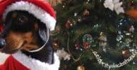 Disfraz de Navidad para Perro img proncipal