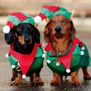 disfraz de navidad para perro salchicha duende